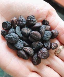 Nên mua loại hạt dổi khô, sạch, không có dấu hiệu ẩm mốc