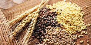 Hạt lúa mì: Giá trị dinh dưỡng và 10 tác dụng vàng đối với sức khỏe
