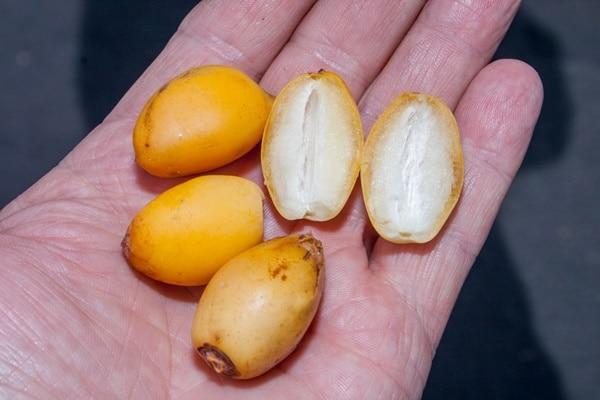 Đây là thực phẩm tốt cho hệ tiêu hóa, giúp bạn có hệ thống tiêu hóa khỏe mạnh