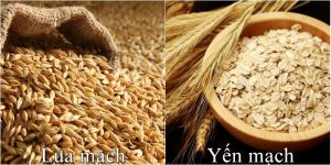 8 lợi ích cho sức khỏe từ hạt lúa mạch